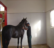 Aquillo being cleaned